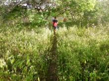 Wayaká-trail 2 (3) pad door de ondergroei