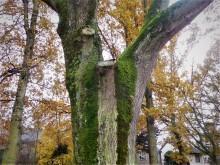 Bomenstromen (1) oude es nummer een aan de Hofdijck