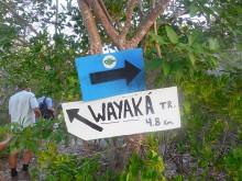 Wayaká-trail (1) het begin van de trail